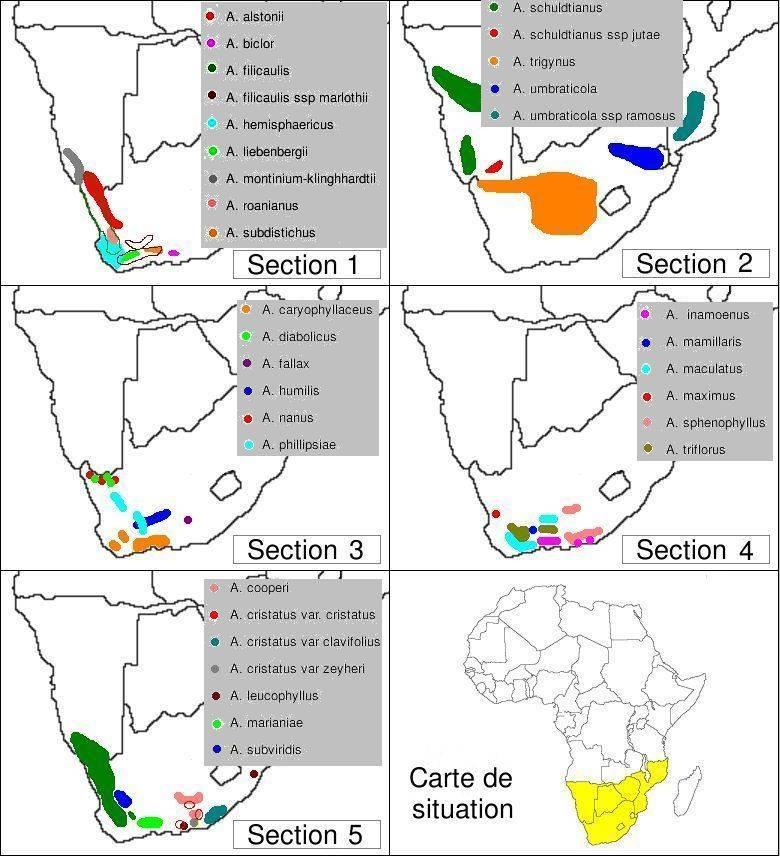 Carte d'Afrique de répartion du genre Adromischus